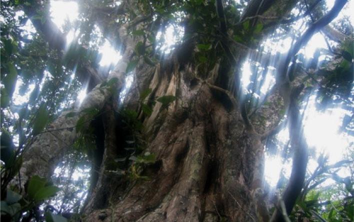 The value of biodiversity in the Phong Nha - Ke...